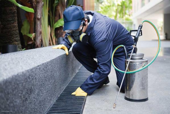 Pest Control Services Milwaukee